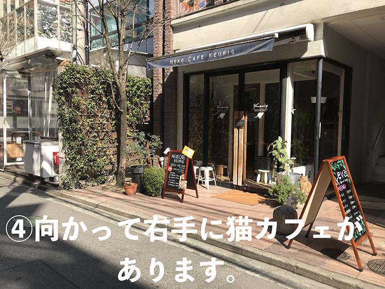 4.向かって右手に猫カフェがあります。